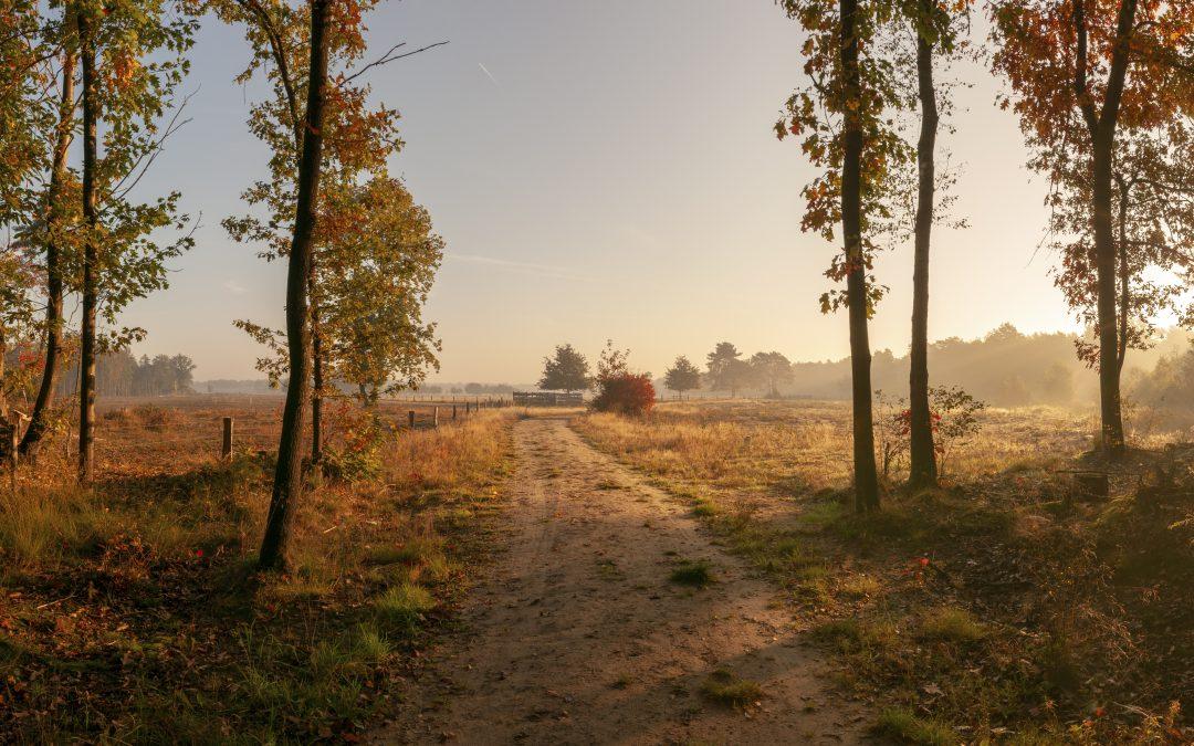 Herfst op de heide