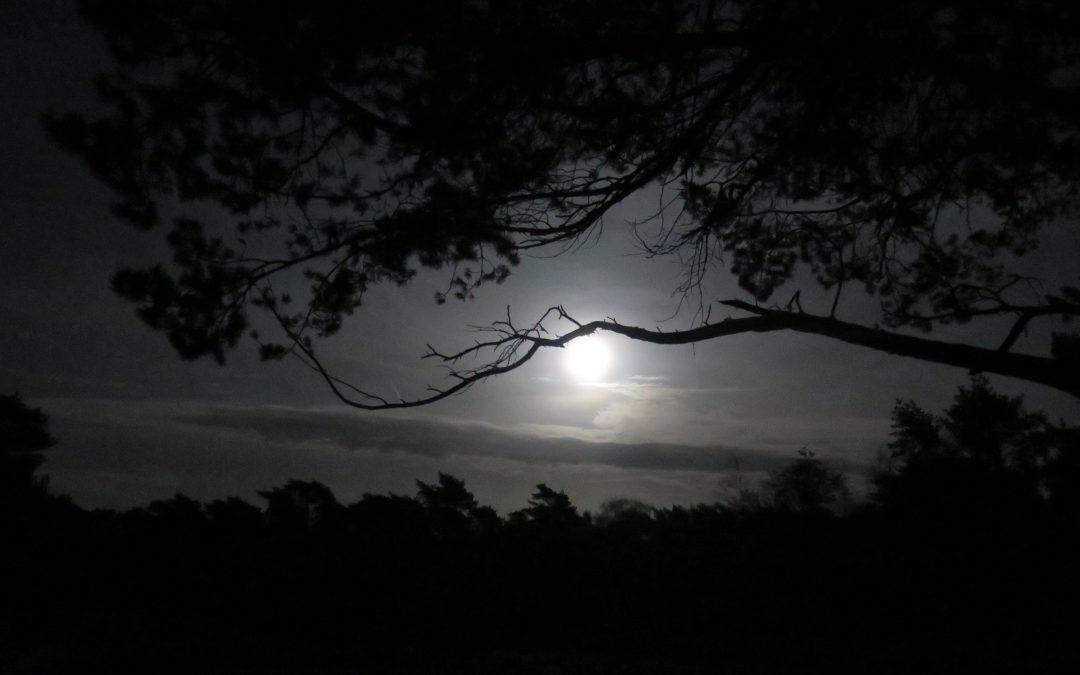 Vollemaanwandeling en Nachtvlinders