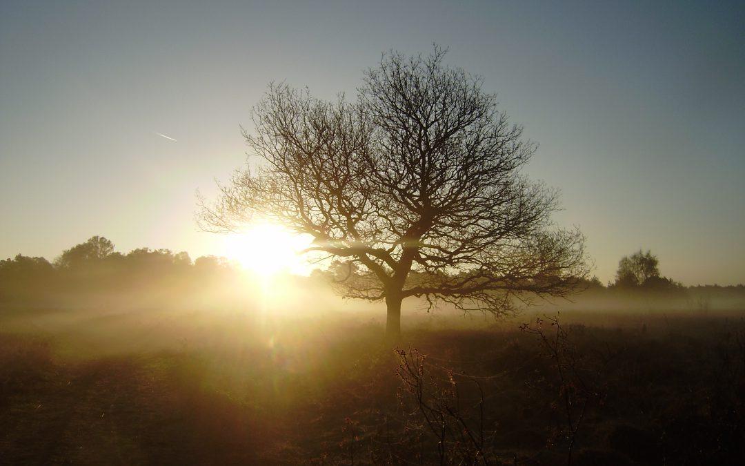 Excursie voor vroege vogels AFGELAST